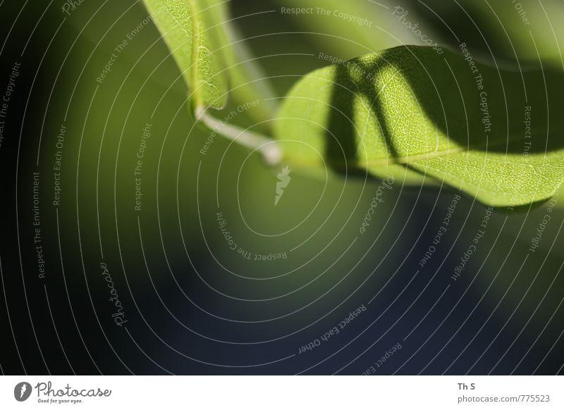 Blatt Natur schön grün Pflanze Sommer Frühling natürlich Gesundheit elegant Zufriedenheit authentisch frisch ästhetisch Blühend einzigartig