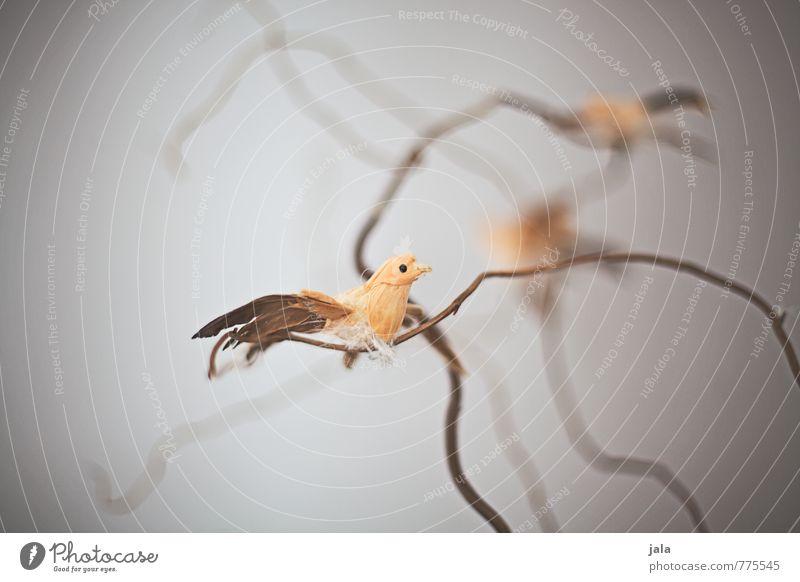 vögel schön Tier Vogel Dekoration & Verzierung ästhetisch Kitsch Krimskrams
