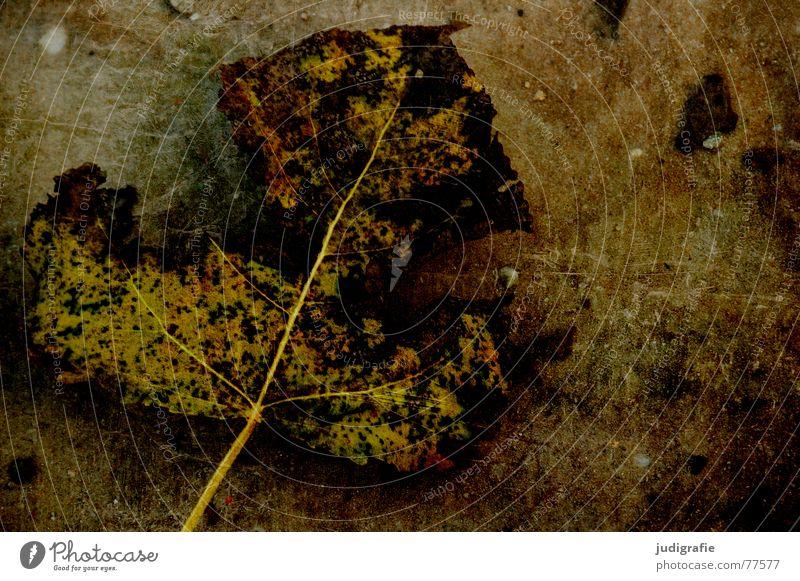 Vergänglich Pappeln zerfressen See Blatt Herbst Teich kaputt Kratzer Baum Pflanze Tod Natur Ende Leben Im Wasser treiben