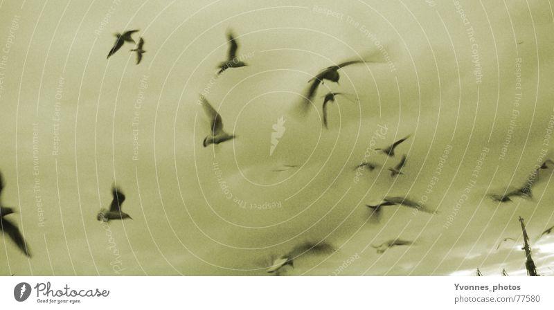Die Vögel Vogel Möwe Wolken Geschwindigkeit dunkel grau Trauer Ferne Sehnsucht Stimmung Meer Horizont Vogelschwarm Himmel Strand Küste möven fliegen Wind