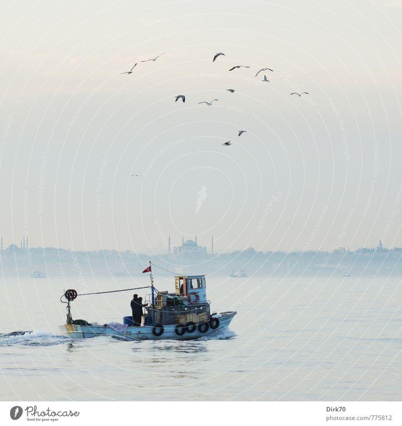 Den Fang einbringen blau weiß Meer ruhig Tier schwarz Küste grau fliegen Vogel Wildtier Schönes Wetter Freundlichkeit Fisch Schifffahrt Möwe