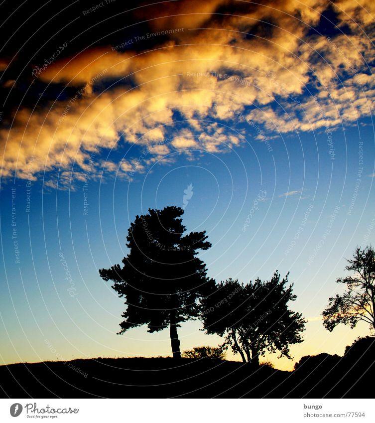 Frieden Baum Wolken schlechtes Wetter dunkel bedrohlich Dämmerung Nacht Horizont Sonnenuntergang träumen Traumwelt Einsamkeit harmonisch Farbenspiel Romantik