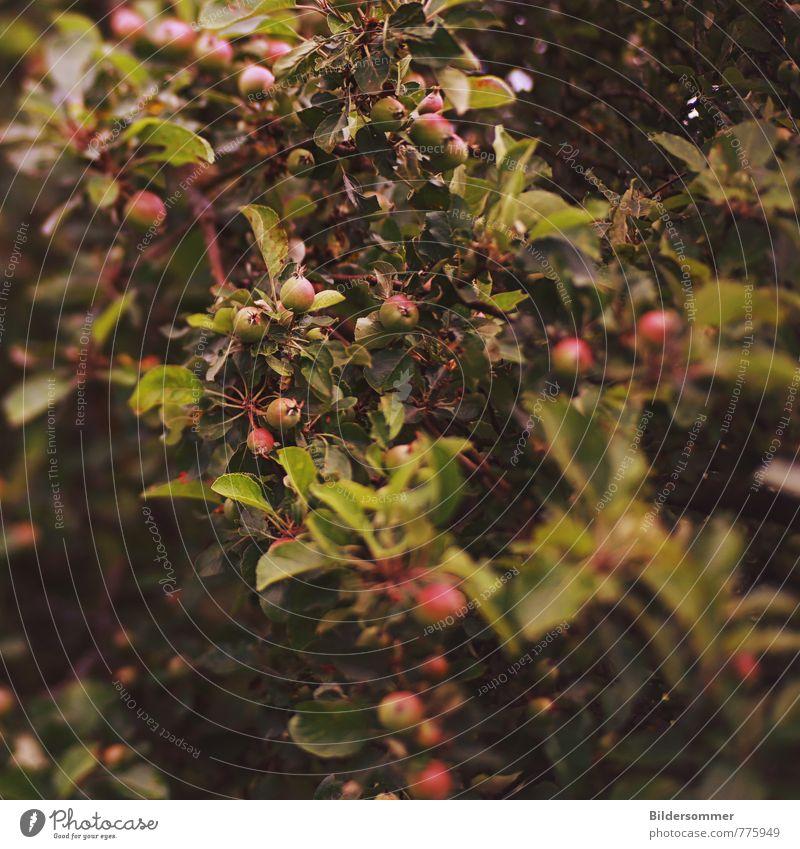 . Natur Pflanze Sommer Baum Umwelt Wiese Zeit Gesundheit Garten Frucht Wachstum Perspektive Ernährung Vergänglichkeit Apfel Bioprodukte