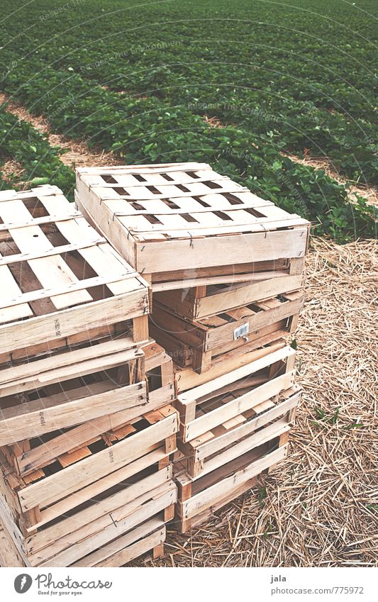kisten Arbeit & Erwerbstätigkeit Landwirtschaft Forstwirtschaft Natur Landschaft Pflanze Grünpflanze Nutzpflanze Erdbeeren Feld Kiste Obstkiste Stapel natürlich