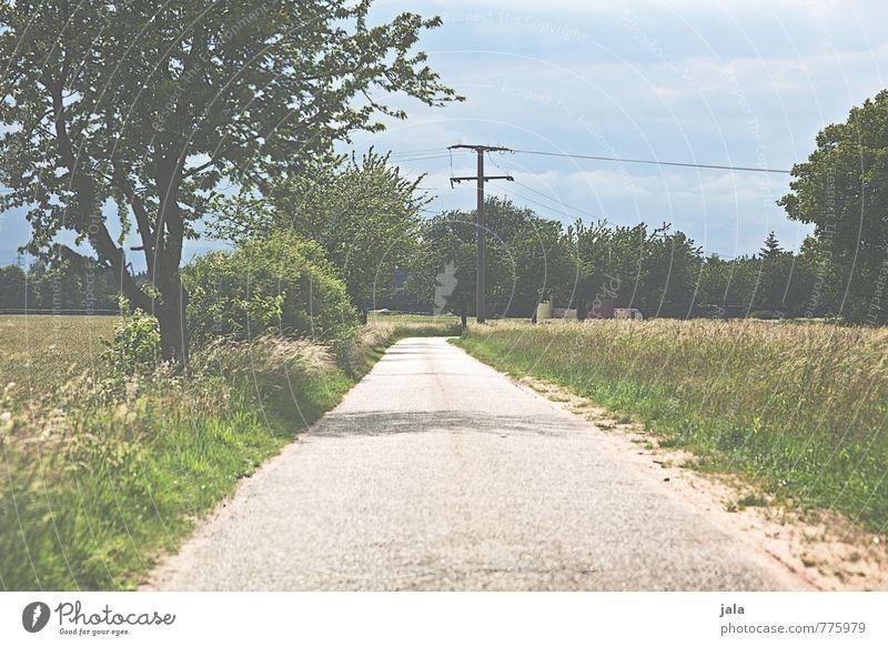 weg Umwelt Natur Landschaft Himmel Sommer Pflanze Baum Gras Sträucher Grünpflanze Wildpflanze Feld Straße Wege & Pfade natürlich Farbfoto Außenaufnahme
