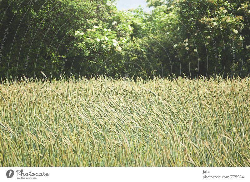 grünstreifen Natur Pflanze Sommer Baum Landschaft Wald Umwelt Gras natürlich Feld Sträucher Grünpflanze Nutzpflanze Wildpflanze