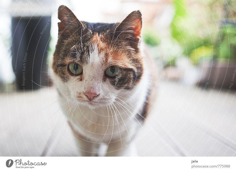 ^^ Tier Haustier Katze Tiergesicht 1 schön Farbfoto Außenaufnahme Menschenleer Tag Tierporträt Blick Blick in die Kamera Blick nach vorn