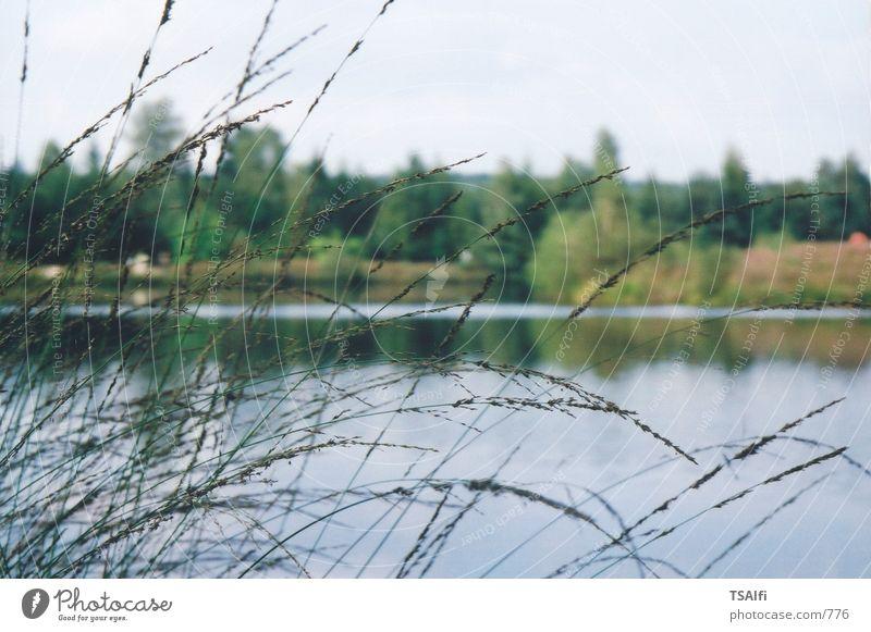 Seegräser Natur Wasser Gras See