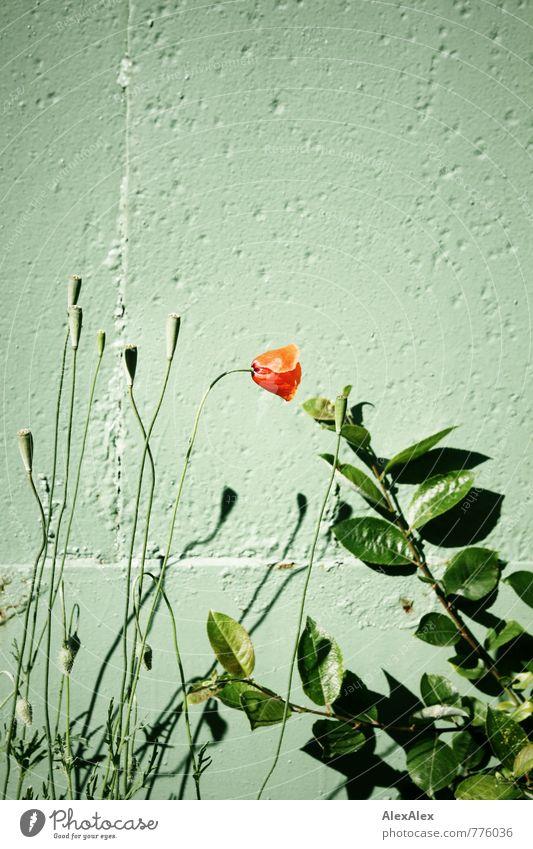 HH - Peute | Blümchenbild Pflanze Blume Sträucher Grünpflanze Beton Blühend ästhetisch einfach schön natürlich grün rot Duft Farbe Idylle Natur Umwelt Verbote