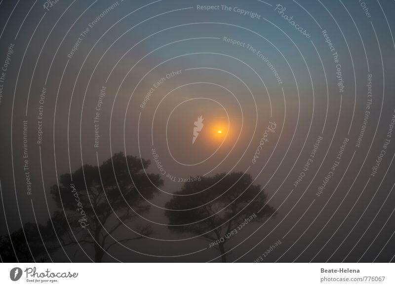 Neuer Tag, neues Glück! Ferien & Urlaub & Reisen Sommer Himmel Wolken Sonne Sonnenlicht Nebel Blume Mallorca atmen beobachten Blick außergewöhnlich fantastisch
