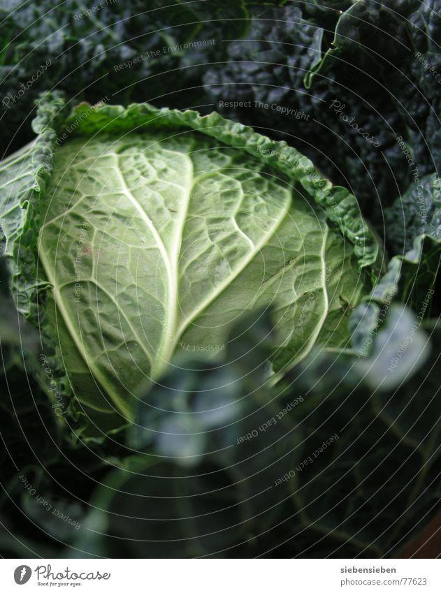 Saison Gemüse grün Pflanze Leben Ernährung Lebensmittel Gesundheit frisch Gesunde Ernährung Landwirtschaft Kohl Gemüse Ernte Vitamin Grünpflanze Vegetarische Ernährung roh