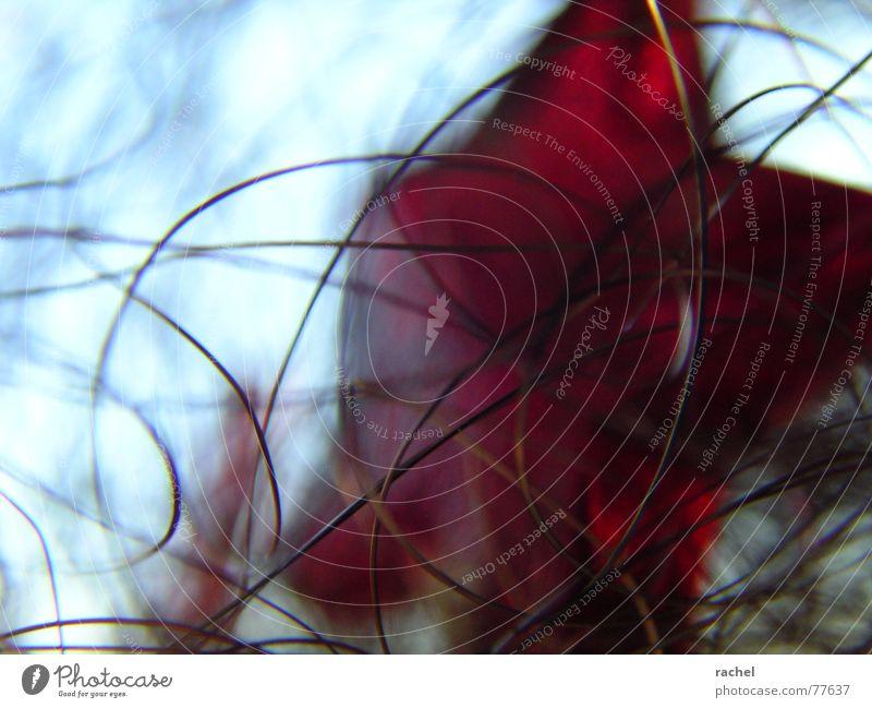 Wired Weihnachten & Advent Bewegung Linie hell Feste & Feiern Metall Stern Stern (Symbol) abstrakt zart Kunststoff gefangen Rausch chaotisch edel
