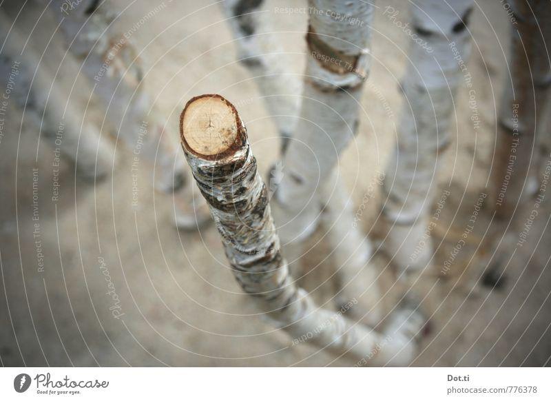ich geh am Birkenstock Pflanze Baum Holz kaputt Birkenstamm Baumrinde abgesägt Schnittfläche Querschnitt Ast rund Durchmesser Farbfoto Gedeckte Farben