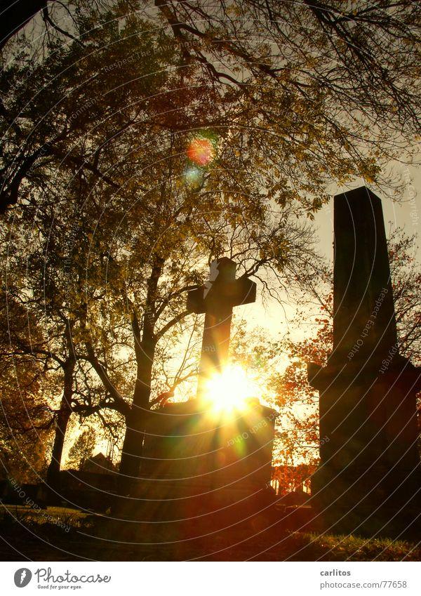es werde Licht Sonne ruhig Herbst Tod Religion & Glaube Traurigkeit Denken Rücken Trauer Frieden Vertrauen Denkmal Gebet Meinung Ruhestand