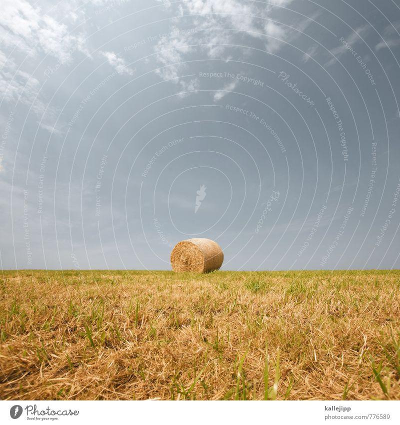 fussball Wirtschaft Landwirtschaft Forstwirtschaft Umwelt Natur Landschaft Pflanze Tier Feld rund Heu Stroh Strohballen Ernte ertrag Erfolg Horizont Stoppelfeld
