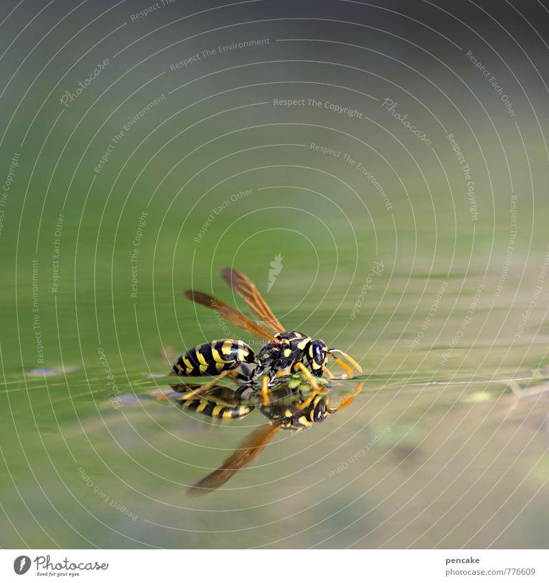 teichträume | see austrinken Natur Wasser Sommer Tier Schwimmen & Baden See Garten fliegen träumen Schönes Wetter Urelemente Flügel Zeichen festhalten Insekt