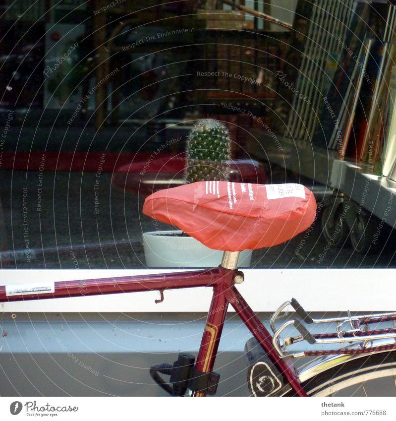 AUA! Schaufenster Fahrrad Sattel Fahrradrahmen Gepäckträger Kaktus Stachel Buch fahren genießen sitzen bedrohlich lustig Spitze stachelig rot Freude