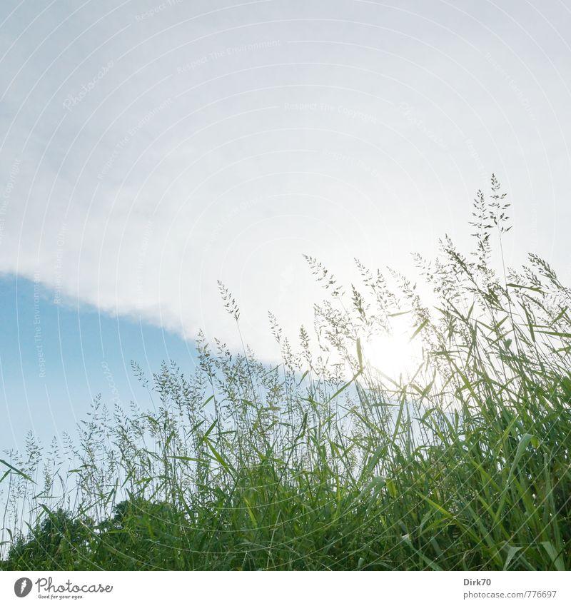 Wiese von unten Natur blau grün weiß Pflanze Sommer Sonne Baum Wolken Blatt Gras grau natürlich Feld leuchten