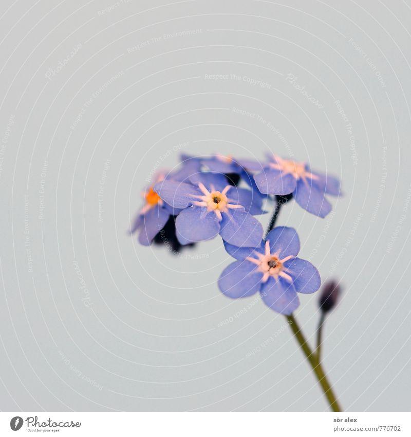 I miss you Natur blau Pflanze schön Sommer Blume Blatt Umwelt Gefühle Liebe Blüte Stimmung Idylle Zufriedenheit Coolness Vergänglichkeit