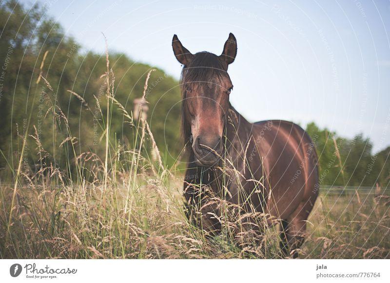rosa Himmel Natur schön Pflanze Sommer Baum Landschaft Tier Wiese Gras wild ästhetisch Freundlichkeit Neugier Pferd Wolkenloser Himmel