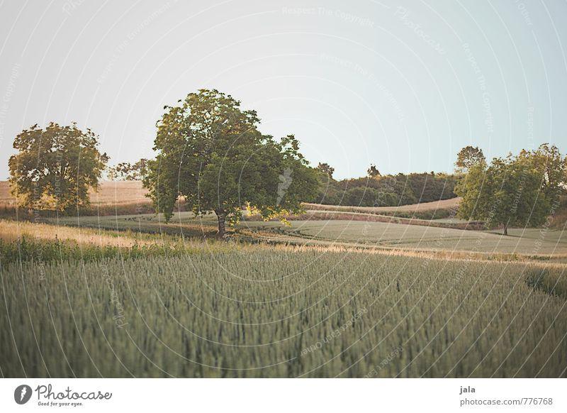 landschaft Umwelt Natur Landschaft Pflanze Himmel Baum Gras Sträucher Grünpflanze Nutzpflanze Wildpflanze Feld Hügel natürlich Farbfoto Außenaufnahme