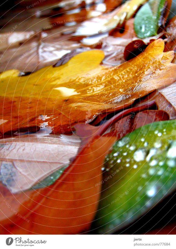Das letzte Laub Herbst Blatt mehrfarbig nass Wasser Wassertropfen Farbe jarts