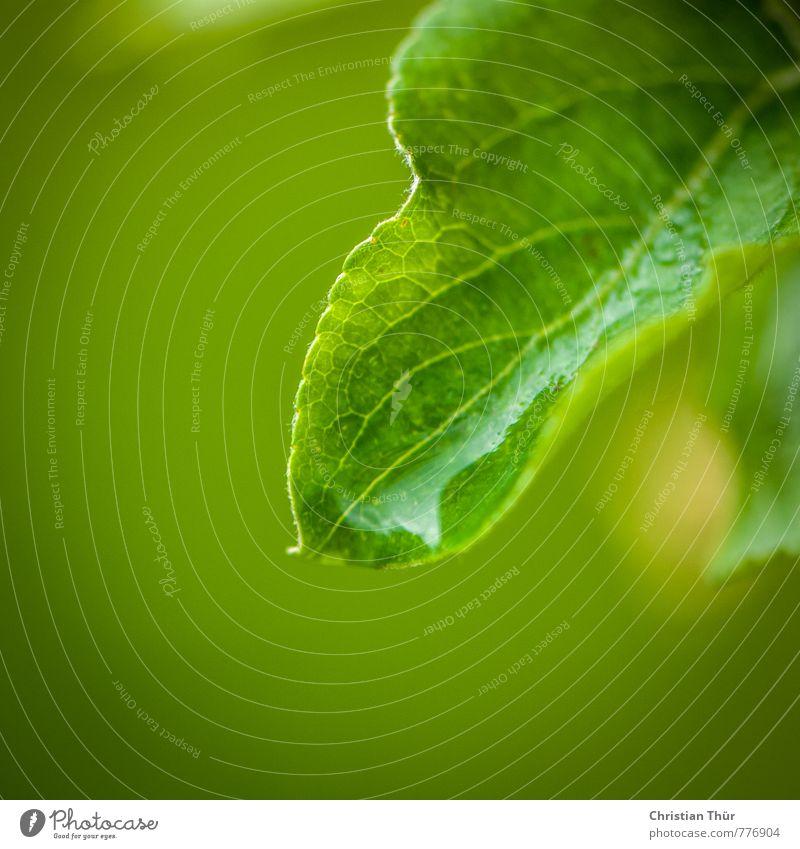 Nässe Natur grün Wasser Pflanze Blatt Umwelt Frühling Stimmung Regen Zufriedenheit ästhetisch nass Blühend Grünpflanze schlechtes Wetter