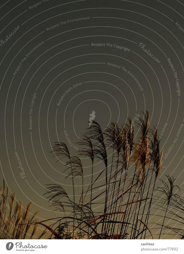 Windspiel II Himmel Herbst Gras Spielen Wind Schrebergarten Richtung wehen Biegung Kompost Fehlfarbe Feng Shui