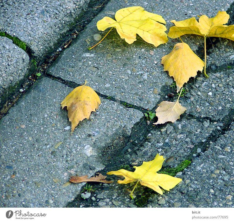 LAUB abfall Blatt gelb Straße Herbst grau Park Umwelt Platz kaputt liegen Asphalt natürlich leuchten Bürgersteig Verkehrswege Moos