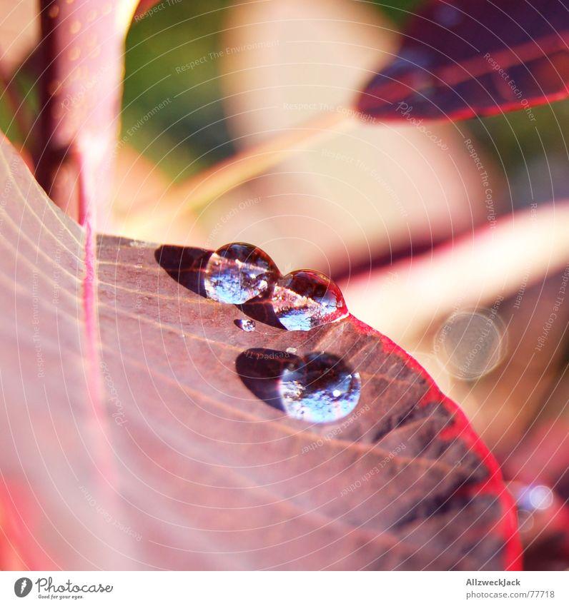 Sonnenbad Blatt Wassertropfen Licht 3 Makroaufnahme Pflanze nass Sommer Regen Natur kuller hazweioh