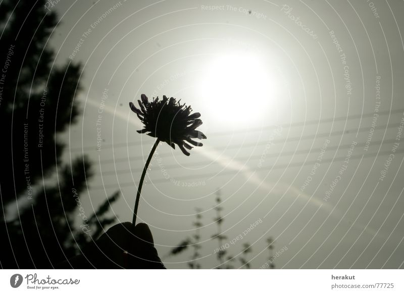 ende sommer Natur Hand Himmel Baum Sonne Blume grau Graffiti Spaziergang