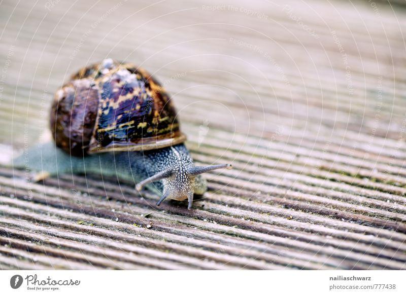 Gartenschnecke Natur schön Sommer Tier Bewegung natürlich braun wild Kraft Fröhlichkeit nass beobachten einfach weich Neugier entdecken