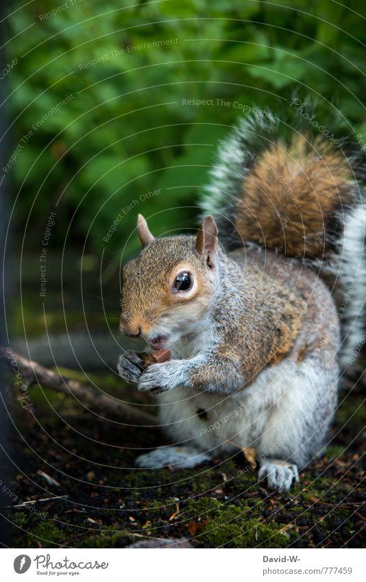 Eichhörnchen - was frisst es da? Natur grün Tier Wald lustig klein Glück Essen Park Erde Zufriedenheit Wildtier genießen beobachten niedlich Neugier