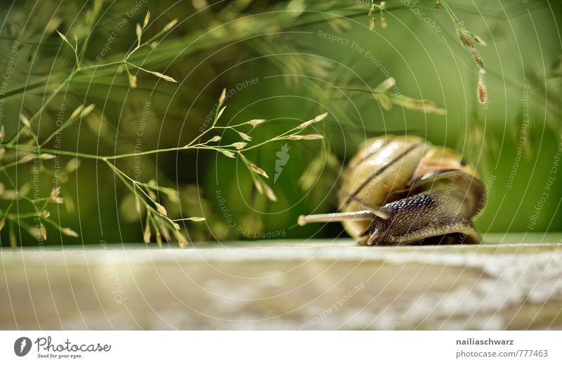 Gartenschnecke Natur Pflanze schön grün Sommer Erholung Tier Umwelt Gras Frühling natürlich braun Park Sträucher beobachten