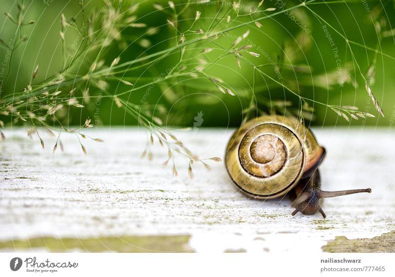 Gartenschnecke Sommer Umwelt Natur Pflanze Tier Frühling Gras Park Wiese Schnecke 1 krabbeln rennen Neugier niedlich positiv schön Tierliebe Interesse entdecken
