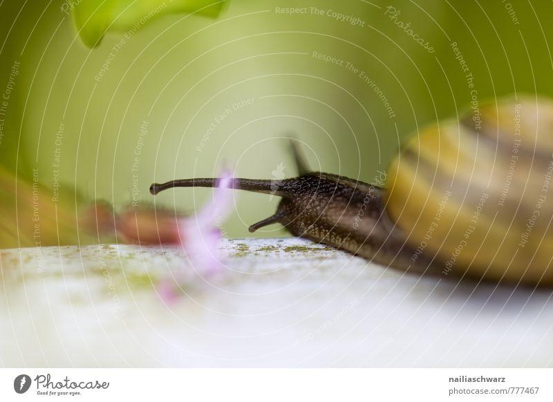 Gartenschnecke Natur Pflanze schön grün Sommer Blume Tier Umwelt Bewegung Wege & Pfade Frühling natürlich braun Park Idylle