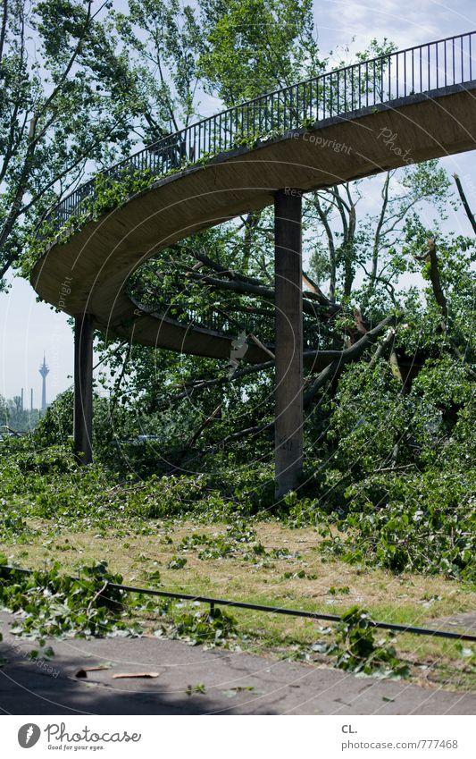 nach dem sturm Umwelt Natur Landschaft Sommer Klima Klimawandel Wetter Unwetter Wind Sturm Baum Düsseldorf Stadt Brücke Bauwerk Verkehr bedrohlich kaputt Angst
