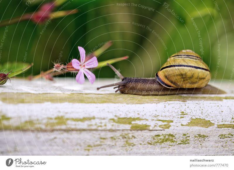 Gartenschnecke Sommer Natur Pflanze Tier Frühling Blume Park Schnecke beobachten Blühend Fressen genießen krabbeln Duft Fröhlichkeit frisch natürlich Neugier