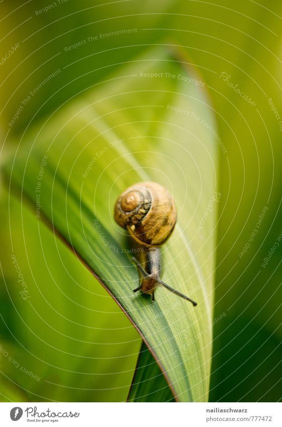 Gartenschnecke Natur Pflanze schön grün Sommer Blatt Tier Umwelt Frühling braun Park Zufriedenheit frei laufen Fröhlichkeit