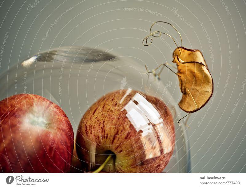 Apfelkäfer Lebensmittel Ernährung Bioprodukte Vegetarische Ernährung Diät Schalen & Schüsseln Dom beobachten krabbeln außergewöhnlich Fröhlichkeit frisch