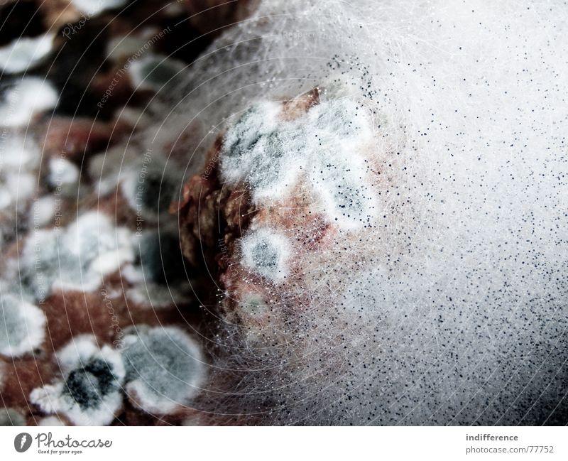 italian Frikadellen! Hintergrundbild Schimmelpilze Fleischgerichte Fleischklösse