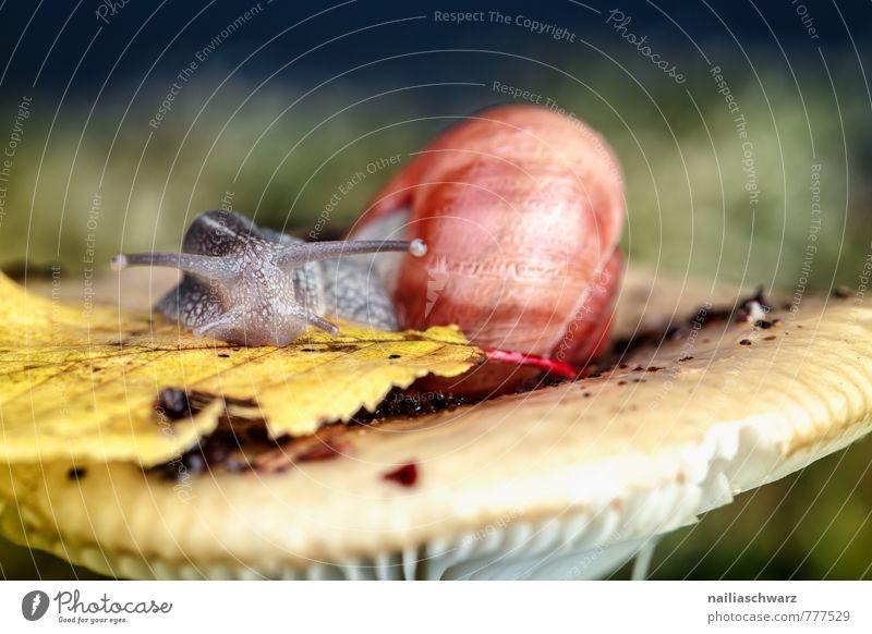Schnecke und Pilz Tier Herbst Moos Blatt Wald Hut 1 Fressen nass niedlich weich grün rot entdecken Natur täubling waldpilz Waldboden herbstlich feucht