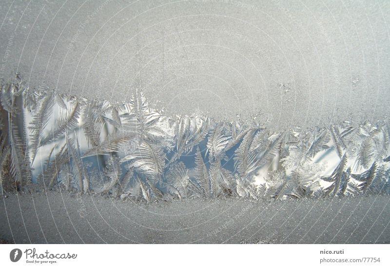 Eisblumen Winter Fenster kalt Blume weiß Schnee Kristallstrukturen Stern (Symbol) Zacken