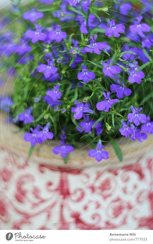 Blumentopf3 Natur blau Pflanze rot Landschaft Häusliches Leben Gartenarbeit