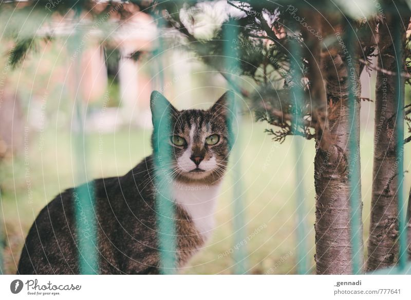 Katze Tier Garten warten Fell Zaun Haustier