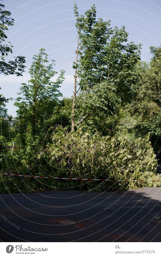 nach dem sturm Himmel Natur Baum Umwelt Straße Wege & Pfade Park Wetter Angst Verkehr Wind Sträucher Klima gefährlich bedrohlich Schutz