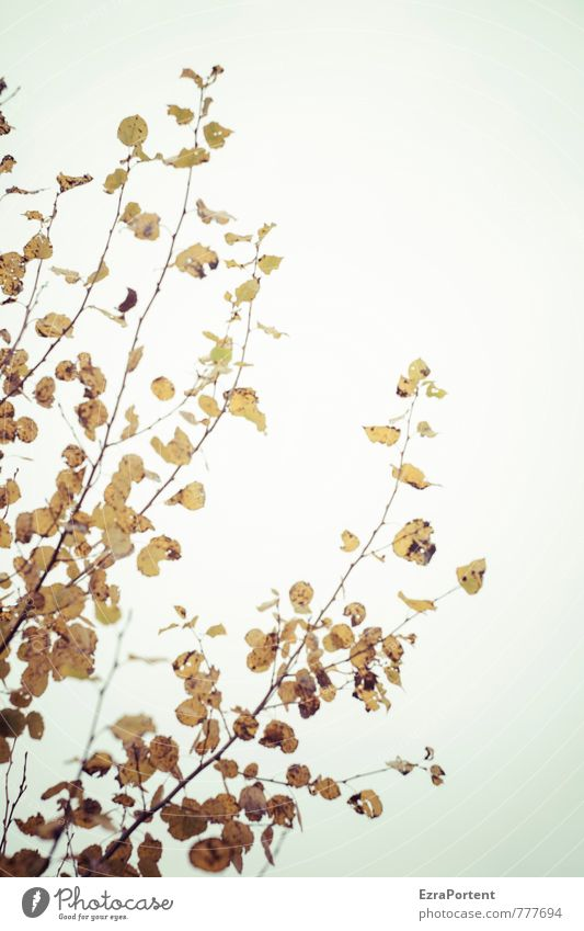 dagegen Himmel Natur blau schön Pflanze weiß Sommer Baum Sonne Landschaft Blatt Wald gelb Umwelt Herbst Frühling