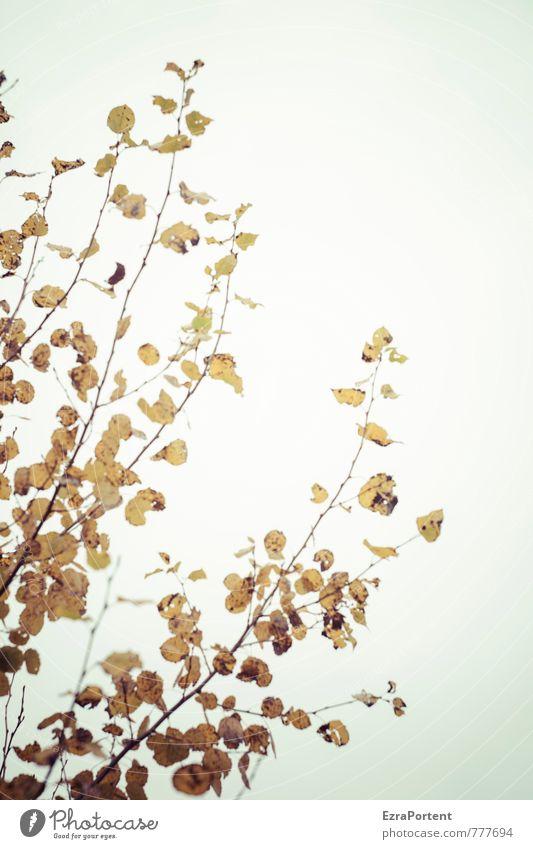 dagegen Umwelt Natur Landschaft Pflanze Himmel Sonne Frühling Sommer Herbst Klima Schönes Wetter Baum Blatt Garten Park Wald leuchten natürlich schön blau gelb