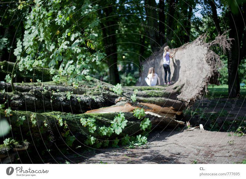 nach dem sturm Mensch Kind Natur Sommer Baum Landschaft Wald Umwelt Spielen Park Wetter Erde Kindheit Wind groß Klima