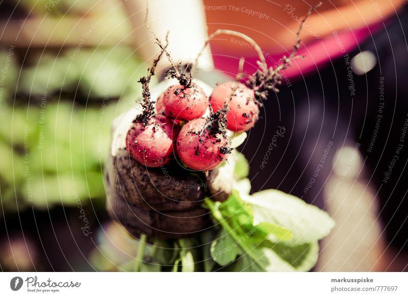 urban gardening - radieschen Mensch Jugendliche Junge Frau Hand 18-30 Jahre Gesunde Ernährung Erwachsene feminin natürlich Gesundheit Garten Freizeit & Hobby